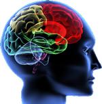 your_brain
